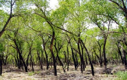 Young Scientists Measure Wildfire Threat on KUNM